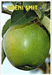 sadnice jabuke greni smit