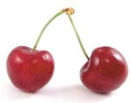 sadnice trešnje