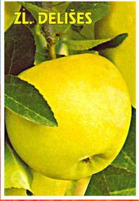 sadnice jabuke zlatni delišes